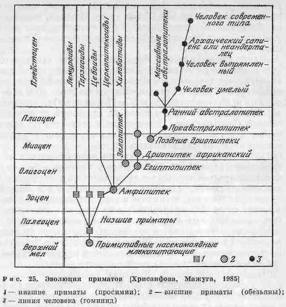 В конце раннего миоцена (около