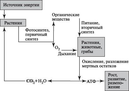 Через процессы обмена веществ