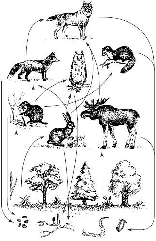Пастбищная сеть питания в
