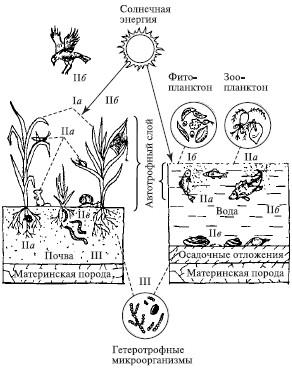 9 основы экологии естествознание и основы экологии