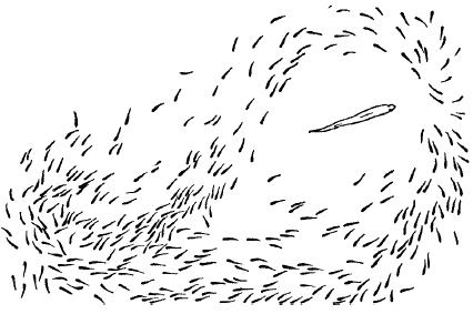 Стаи при перелетах образуют те