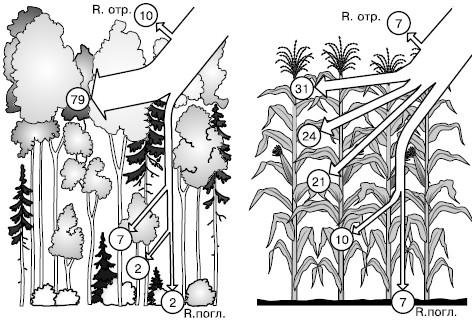 в биоценозах очень сложные
