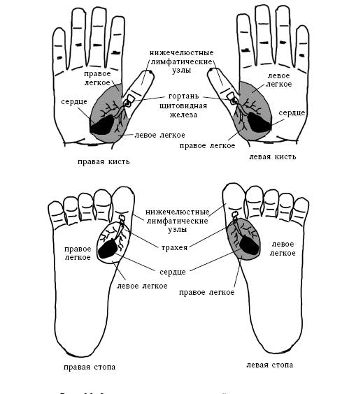По системе насекомого тазобедренный сустав блокировка малого фасеточного сустава