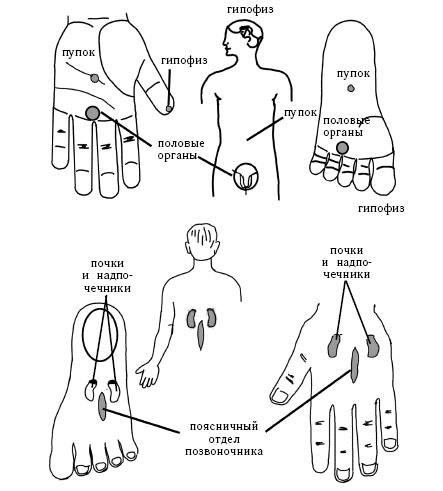 Точечный массаж для повышения потенции