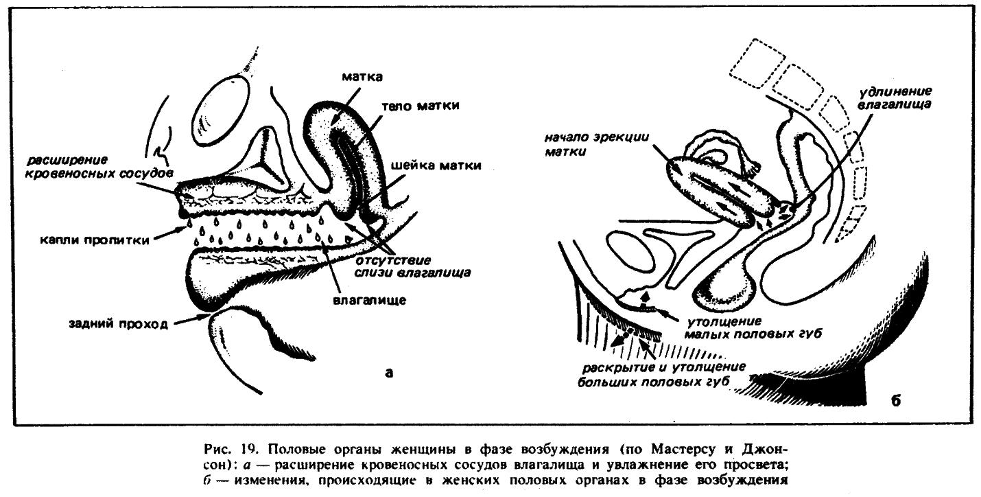 Многократное спермоизвержение внутрь