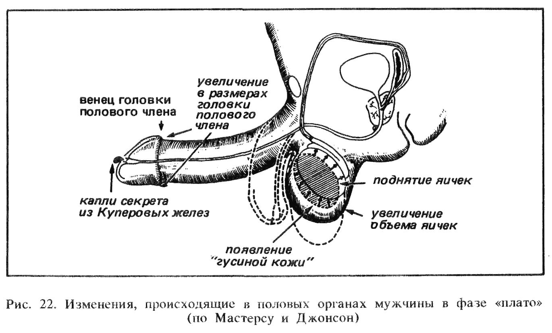 Формы и виды вагин 114