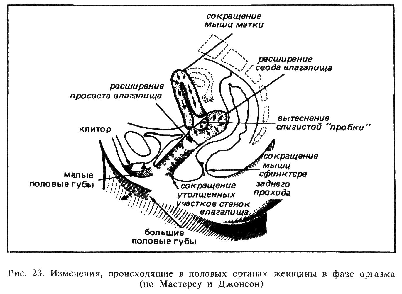 dlya-prosmotra-eroticheskih