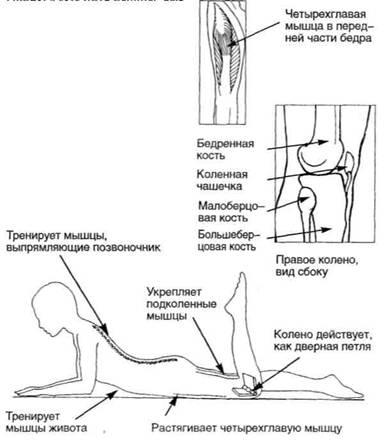 цигун при заболеваниях коленного сустава