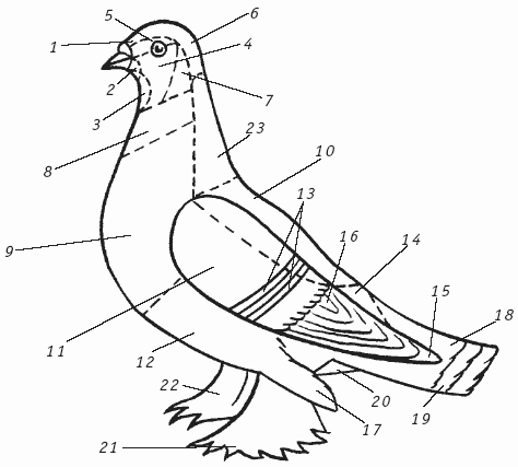 6) у голубей бывает черной,