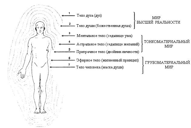 У живых систем торсионные поля